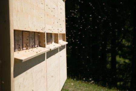 keybach-pressereise-blog-natur-juni-biene-bild002