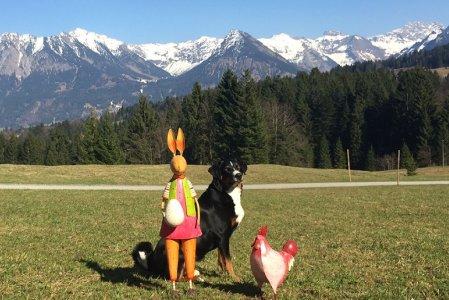 Alpe-Dornach-Oberstdorf-Hunde