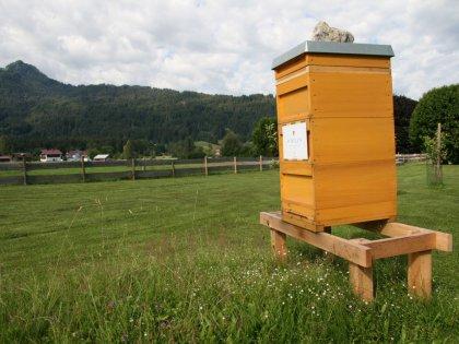 schueles-oberstdorf-socialblog-september-natur-bild005