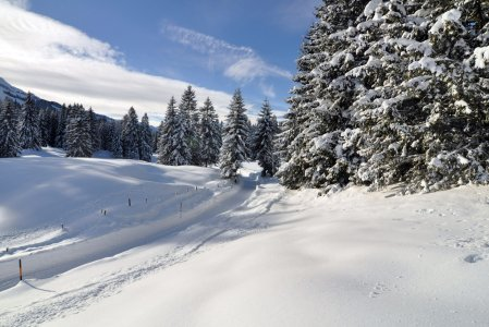 Loewen - Oberjoch