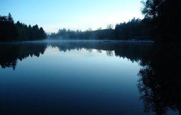 waldsee-hoehepunkt-erleben