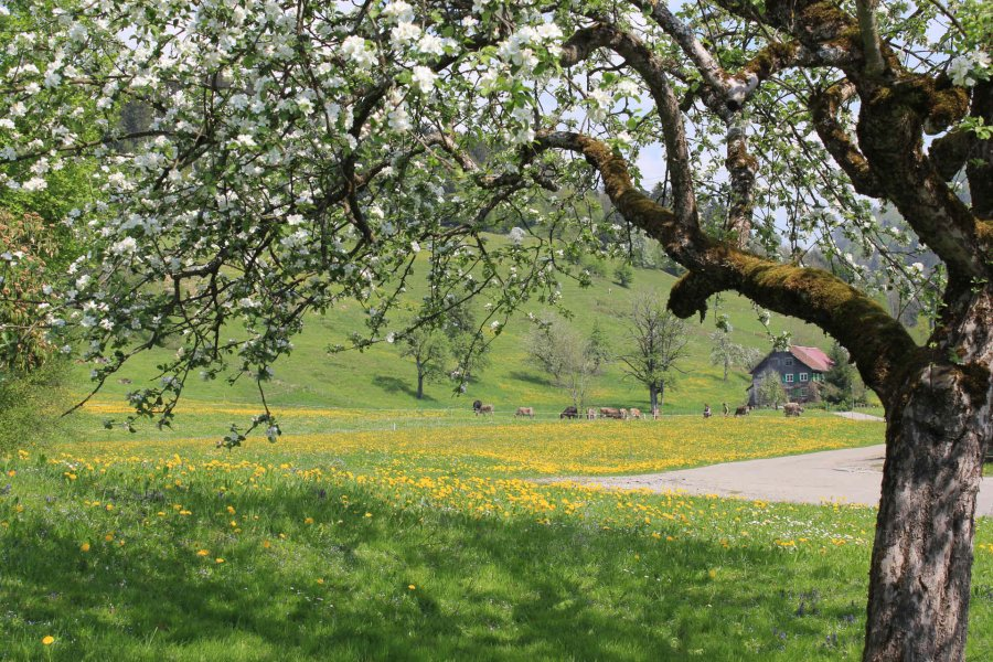 muehlenhof-oberstaufen-blog-grünes-allgäu003.JPG
