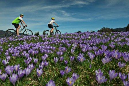 koenigshof-city-garni-oberstaufen-rubrik-bike