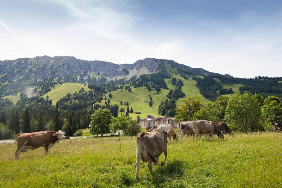 travelcharme-ifen-kleinwalsertal-blog-natur-juli-bild001