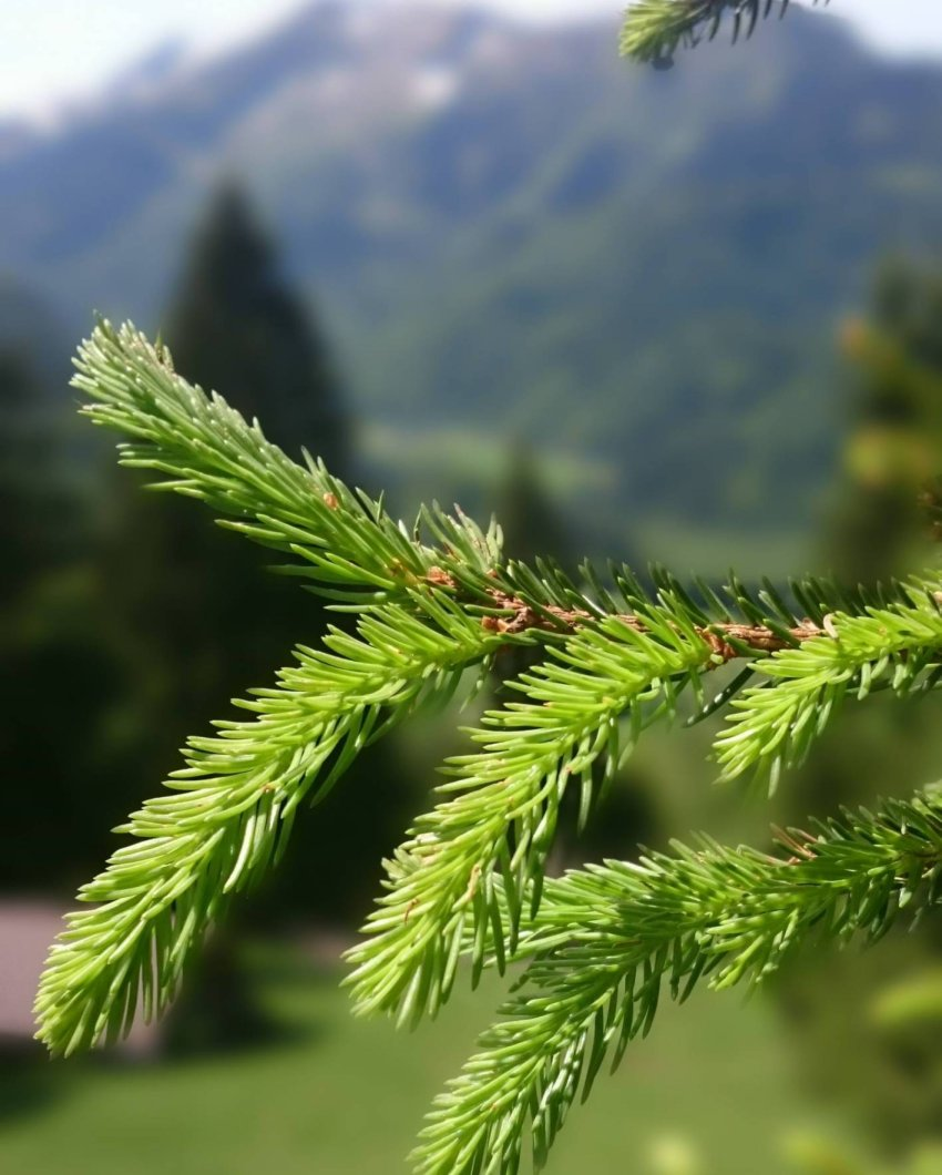 alphorn-ofterschwang-social-blog-juli-bild-002