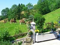 Die Kühe sind wieder im Tal