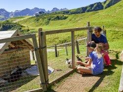 Die Hasen an der Alpe beobachten