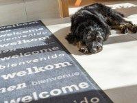 Hund sind herzlich willkommen