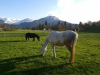 Pferde am Delleberg
