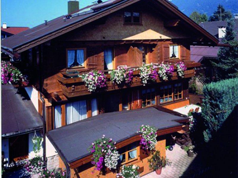 Haus-Bergblümle