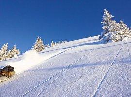 Airboard Downhill -  unter Tannen