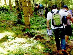 Geocaching - Waldweg