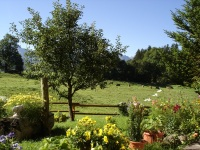 Ein Ausflug in unseren Garten