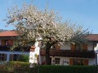 Frühling in Kornau
