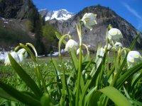 Frühling im Tal