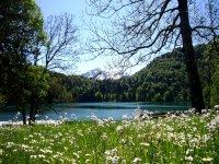 Freibergsee im Frühling