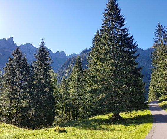 Straße ins Rappenalptal