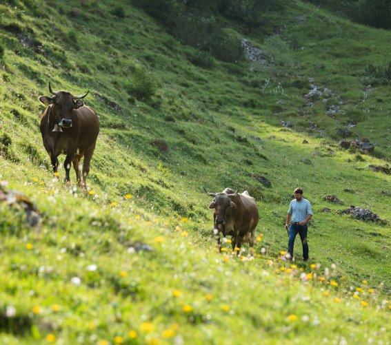 Kühe an der Fluchtalpe
