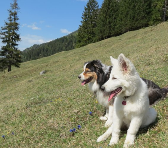Hund Romy2