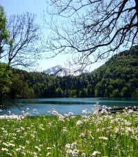Frühling am Freibergsee