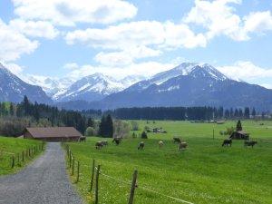 Wiesenweg von Rubi nach Oberstdorf