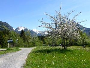 Apfelbaum am Moorweiher