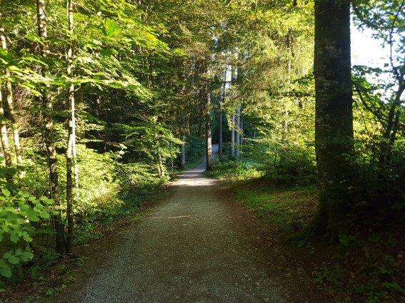 Waldweg Richtung Golfplatz