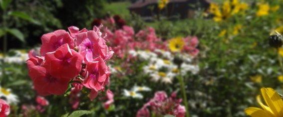 Blumenbeet in Kornau
