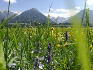 Blühende Öschwiesen