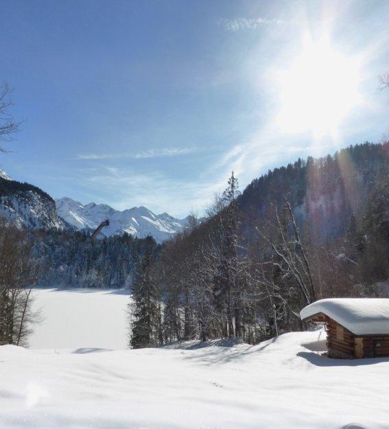 Winter Freibergsee  (5)
