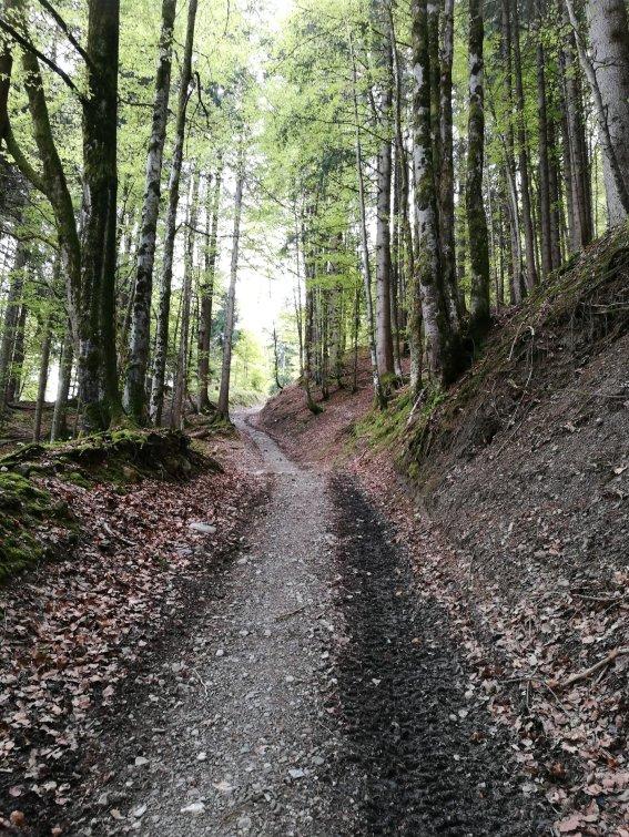 Weg Geißberg