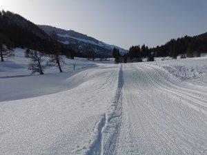 Langlaufen im Rohrmoos (3)