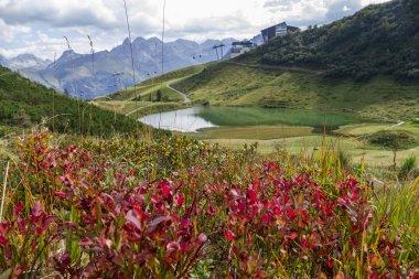 Herbstliche Alpenrosen am Fellhorn