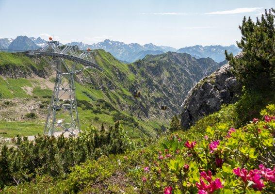 Alpenrosen vor der Bergbahn