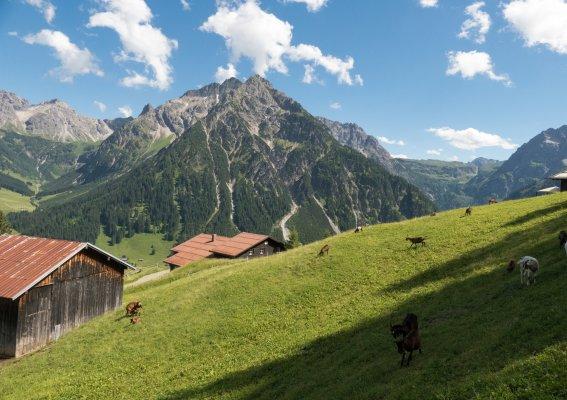 Ziegenherde am Höhenweg