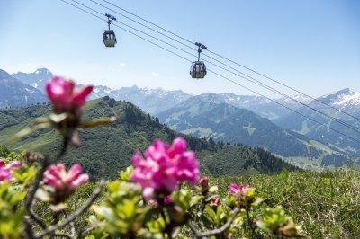 Die Kanzelwandbahn hinter Alpenrosen