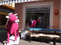 Hofmilch Kuh