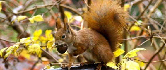 Eichhörnchen-Wald Fischen
