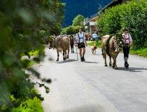 2017-09-11 Alpe Schlappold-006-3000
