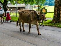 2017-09-11 Alpe Schlappold-008-3000