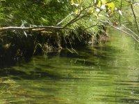Naturweiher