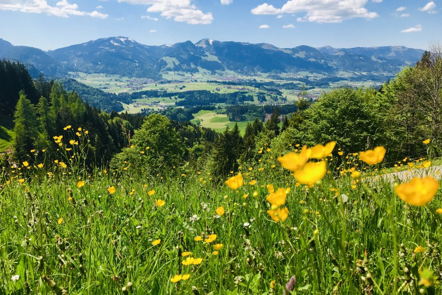 Bergblumenwiese