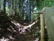 Waldwanderweg in Sonderdorf