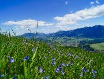 Blühende Aussicht