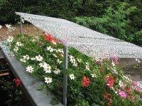 Blumendächle
